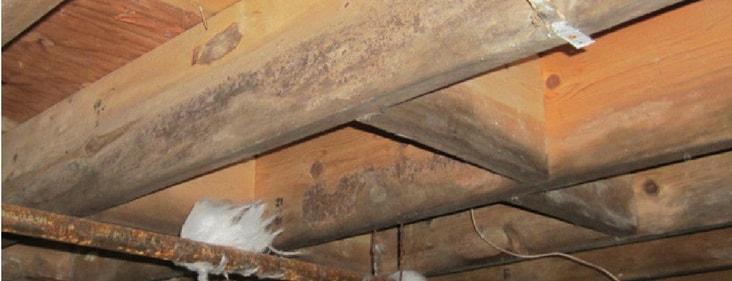 water under house