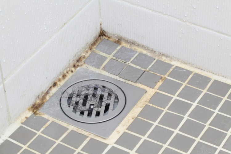 remove mold from shower caulking
